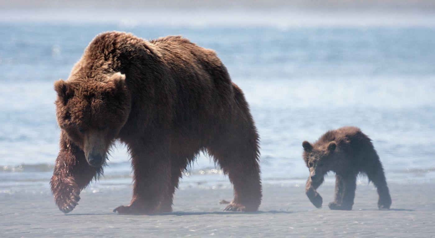 Bären Film